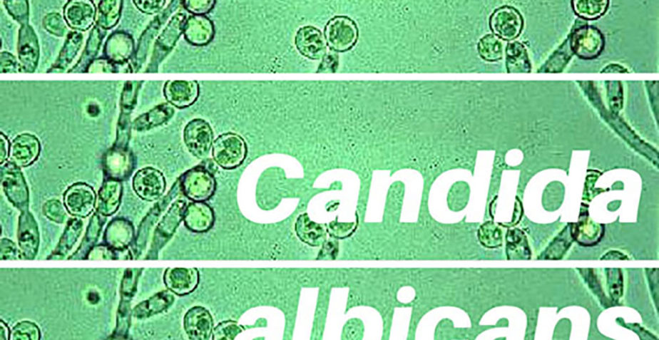 Test a Candida albicans